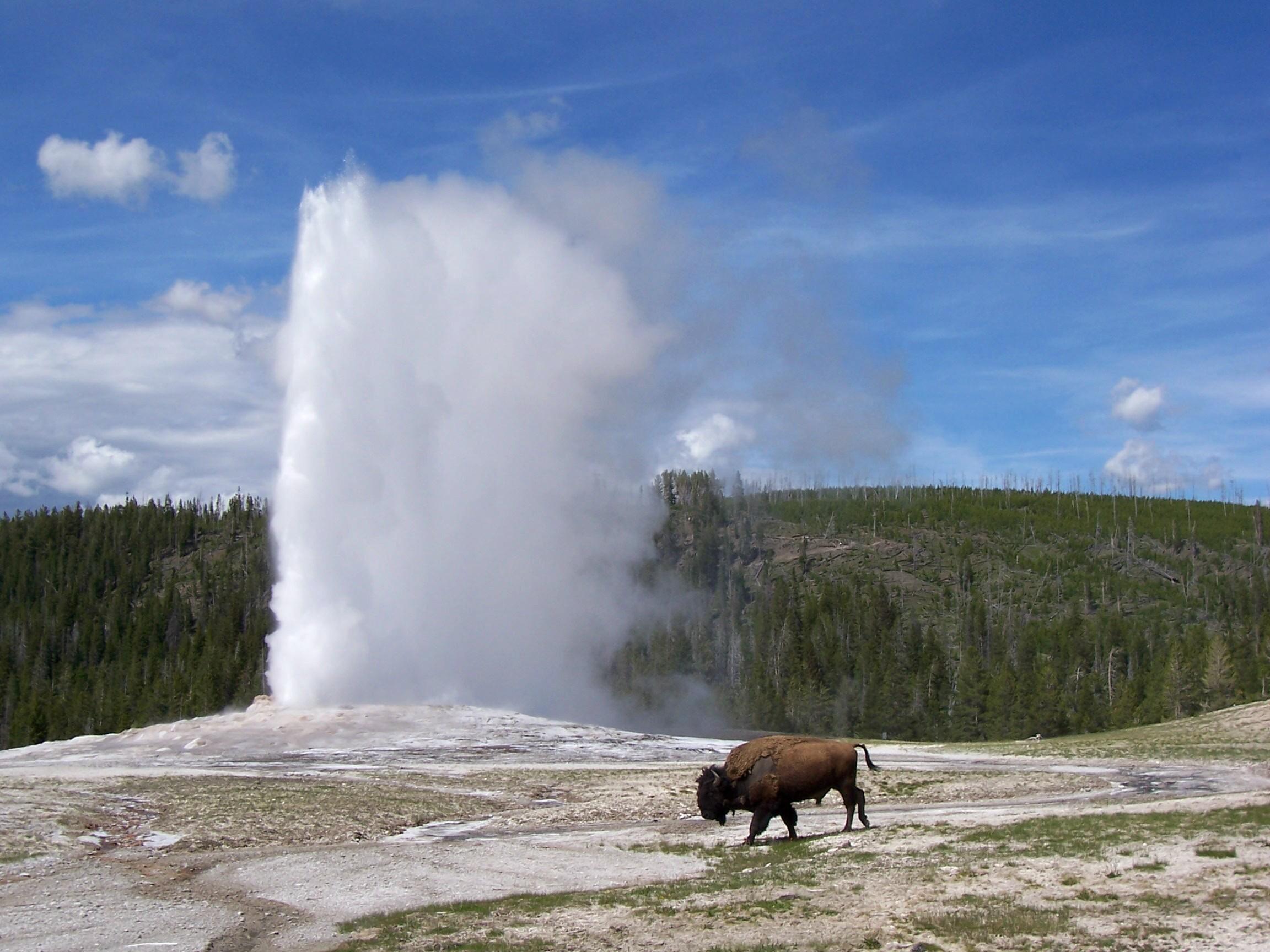 Old Faithfull Yellowstone