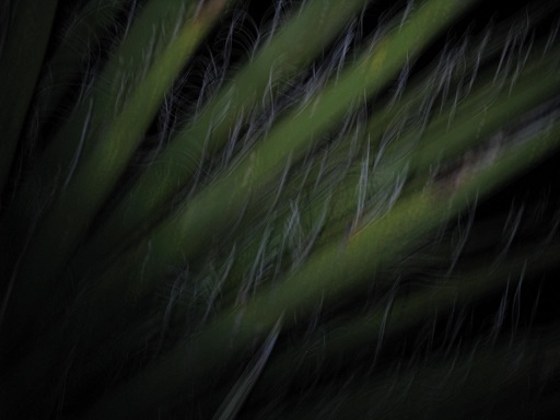http://stormrunneraz.tripod.com/yucca.JPG